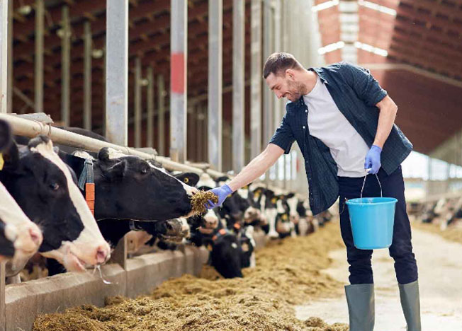 Farm Mutual Insurance