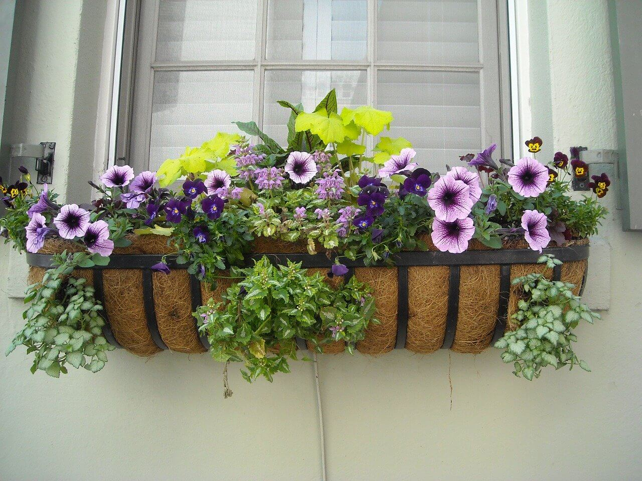 Window Planter