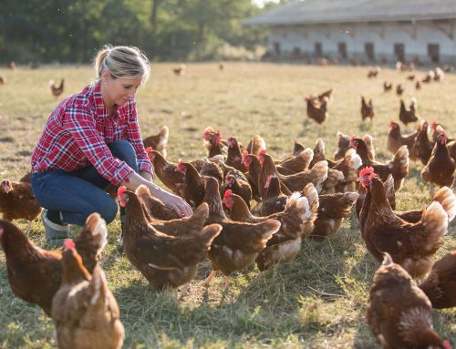 The Importance of Farm Insurance