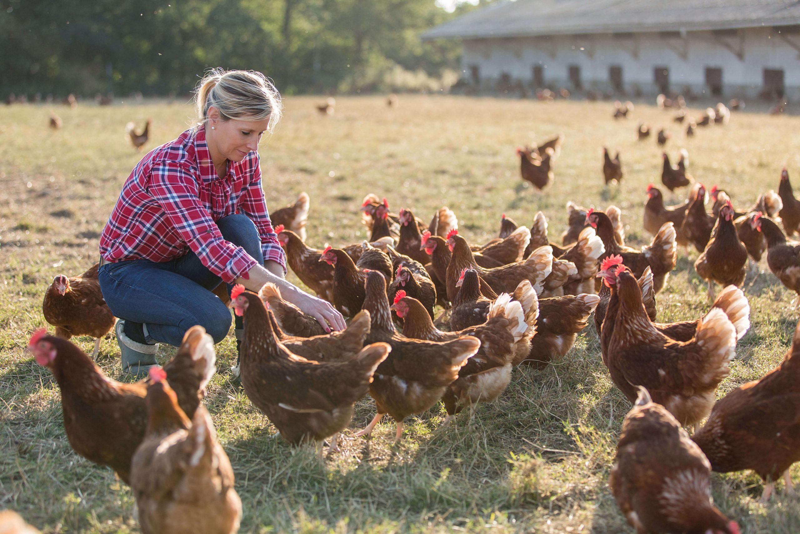 Farming Insurance